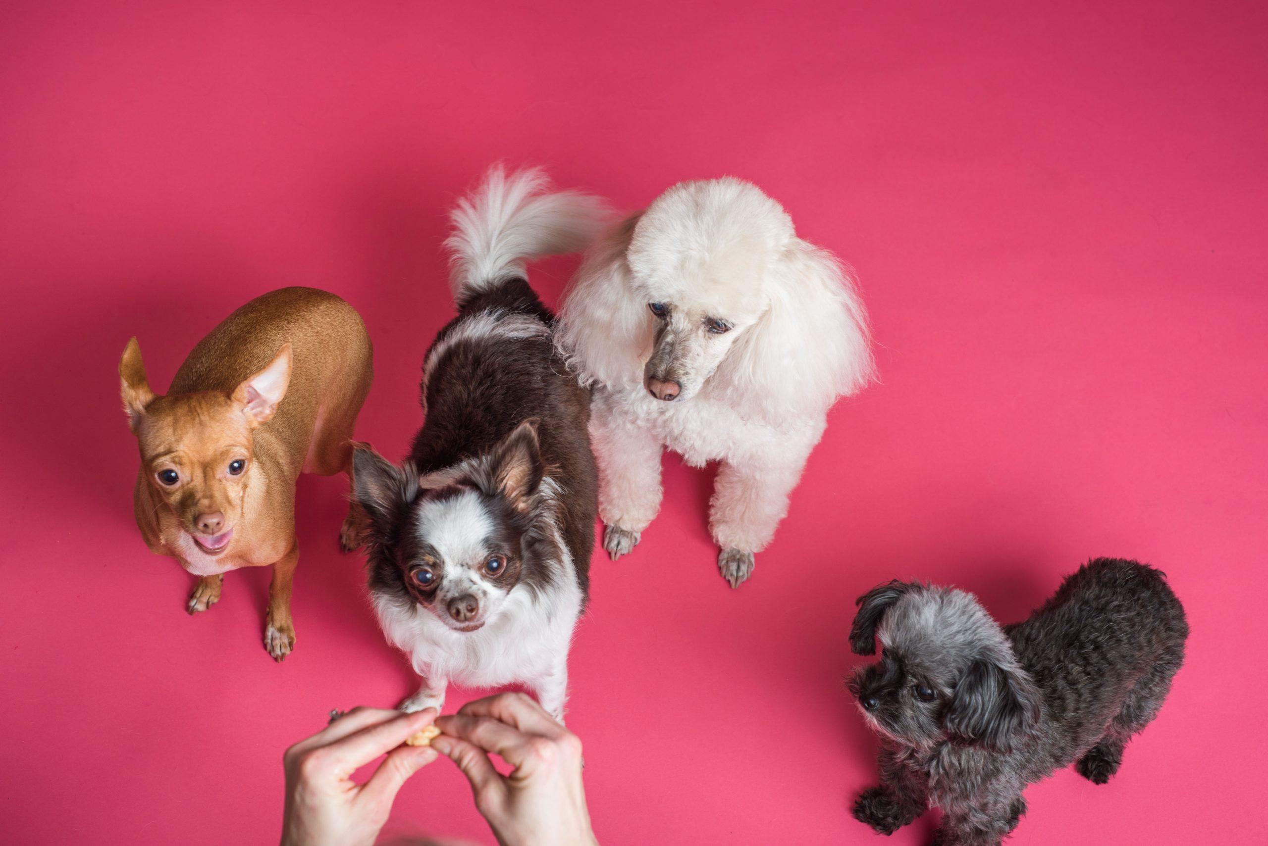 Comment trouver la bonne race de chien?